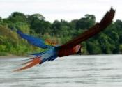 amazon river cruise extension 4