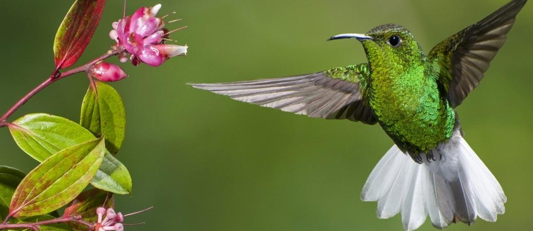 shutterstock_hummingbird - Copy