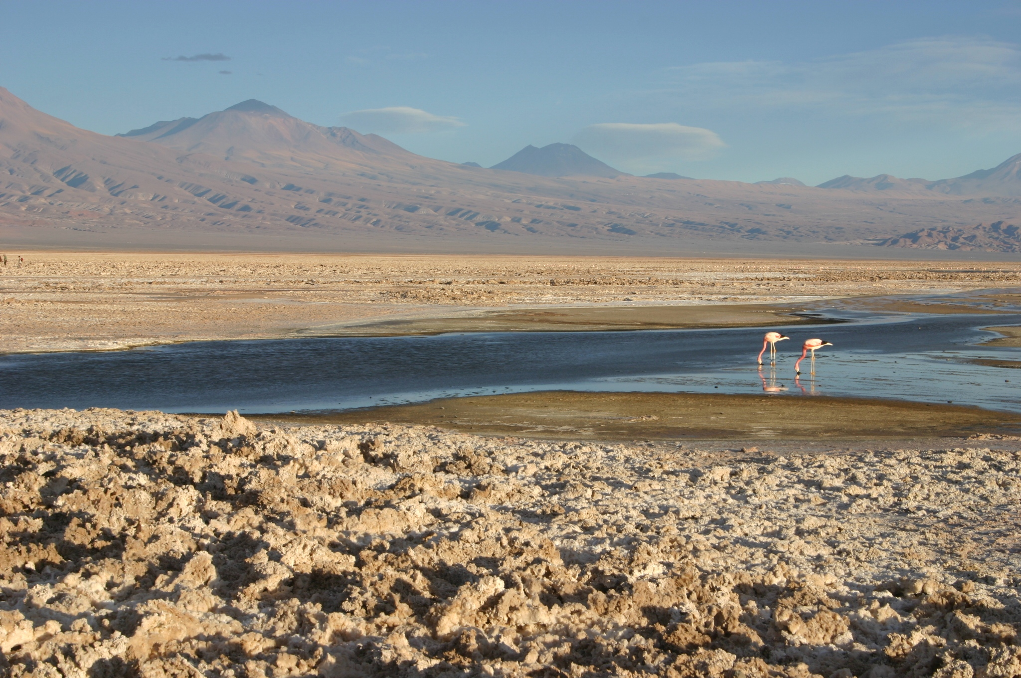 Salt Flats and Flamingos